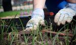 Mandate le vostre foto mentre piantate le sementi