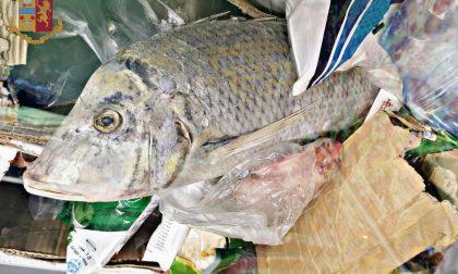 Orrore in macelleria, trovati alimenti in cattivo stato di conservazione LE FOTO