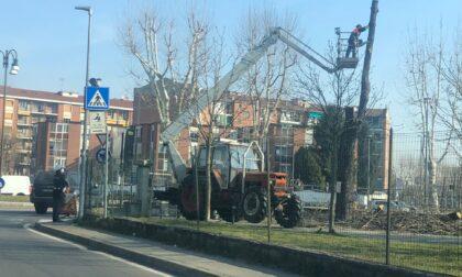Partito l'abbattimento dei cinque alberi del viale storico del Canale Cavour