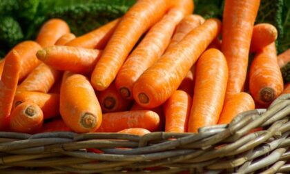 In regalo con La Nuova Periferia di Chivasso i semi di carota
