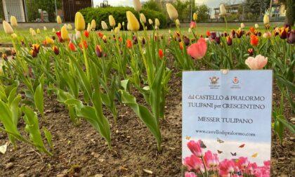 I tulipani del Castello di Pralormo sono fioriti al Parco Tournon