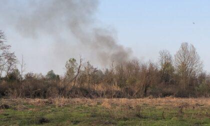 Incendi nel Parco del Po, caccia al piromane LE FOTO