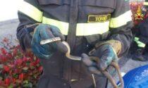 Serpente nel vano motore, recuperato dal Vigili del Fuoco