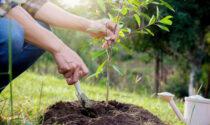 Amazon regala piante a un intero paese, ma pochi ne approfittano