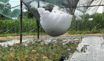 Tromba d'aria sul Chivassese, distrutti tutti i raccolti: il bilancio di Coldiretti