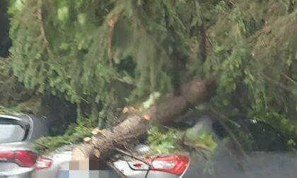 A Chivasso un albero colpisce una Maserati