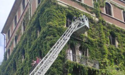 Gatto bloccato ai piani alti di un palazzo, arrivano i Vigili del Fuoco