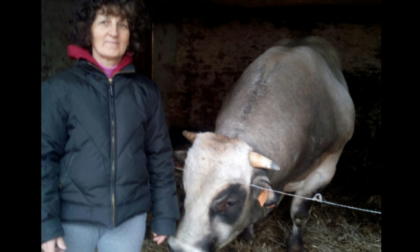 Due tragedie in poche ore: donna incornata da un toro, uomo travolto dal suo trattore