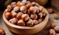 Allergia alla nocciola, scoperta la proteina che la provoca
