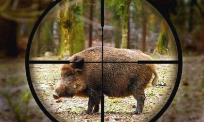 Cacciatore spara al cinghiale, l'animale lo carica e gli recide l'arteria femorale